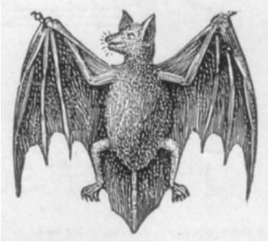 Logo van Stubgen Bat fledermaus